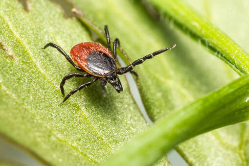 tick control services in Greenville